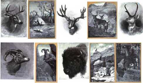the-hunters-hunting-ebook-library-pics-1